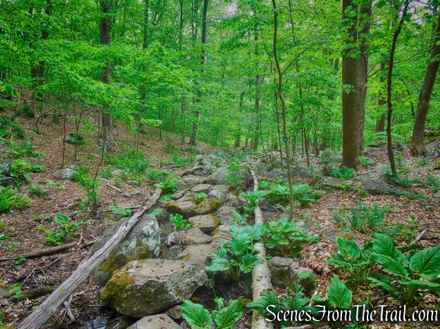 Streambed Steps - Southern Loop