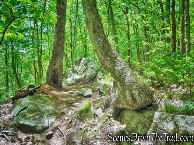 Southern Loop - Westchester Wilderness Walk