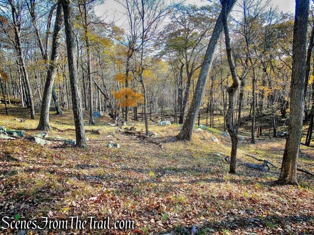 bushwack - Pine Swamp Mountain