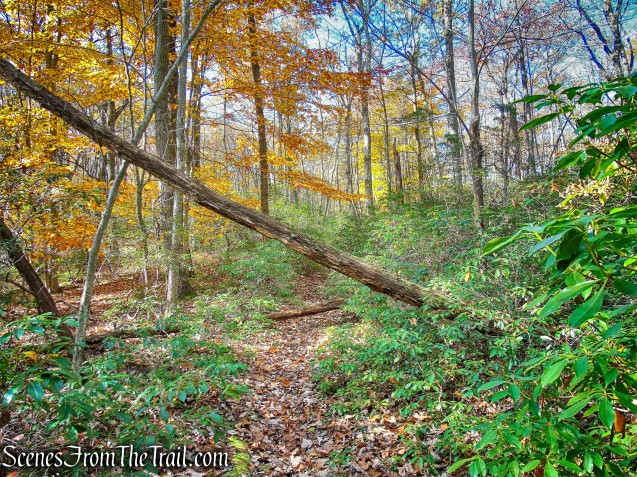woods road - Rockhouse Mountain