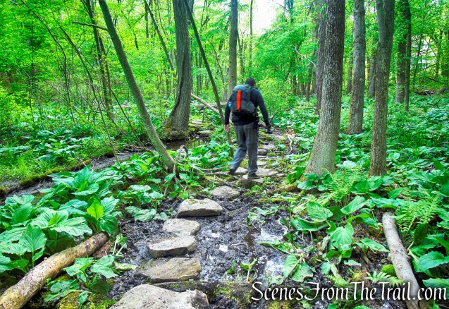 Westchester Wilderness Walk – Zofnass Family Preserve