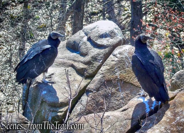 Quinnipiac Trail – Sleeping Giant State Park