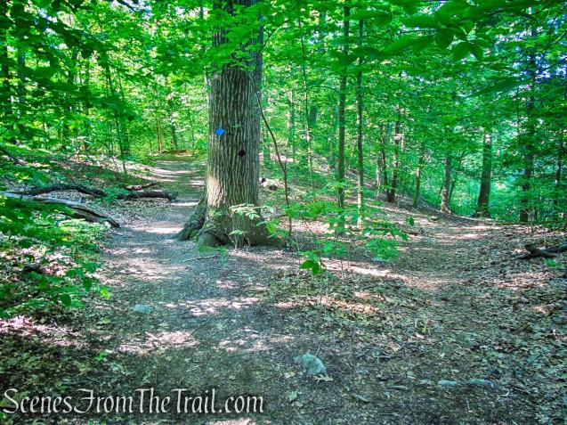 turn right on Purple Trail