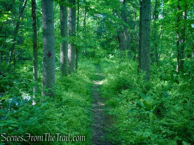 Purple Trail - Whippoorwill Park
