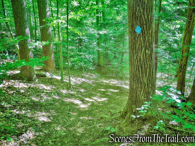 Blue Trail - Whippoorwill Park