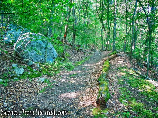 turn right on Orange Trail - Whippoorwill Park