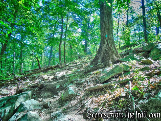 Green Trail - Whippoorwill Park