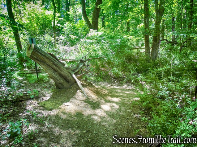 White Trail - Whippoorwill Park