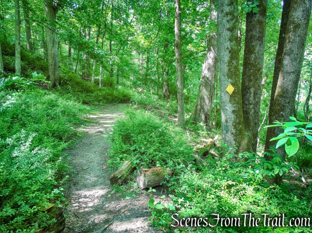 Yellow Trail - Whippoorwill Park