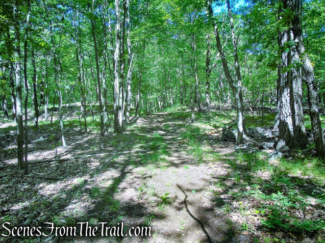 woods road - Salt Hill State Forest