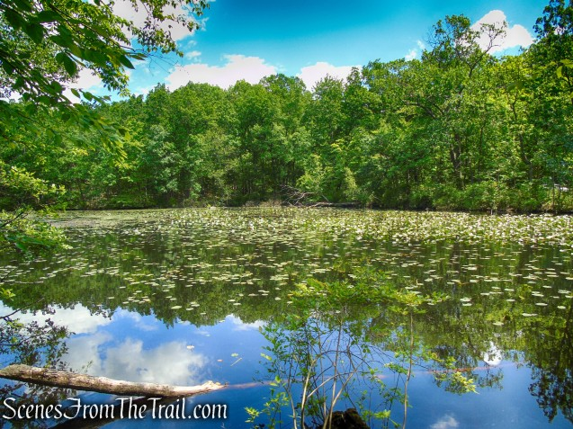 pond - Salt Hill State Forest