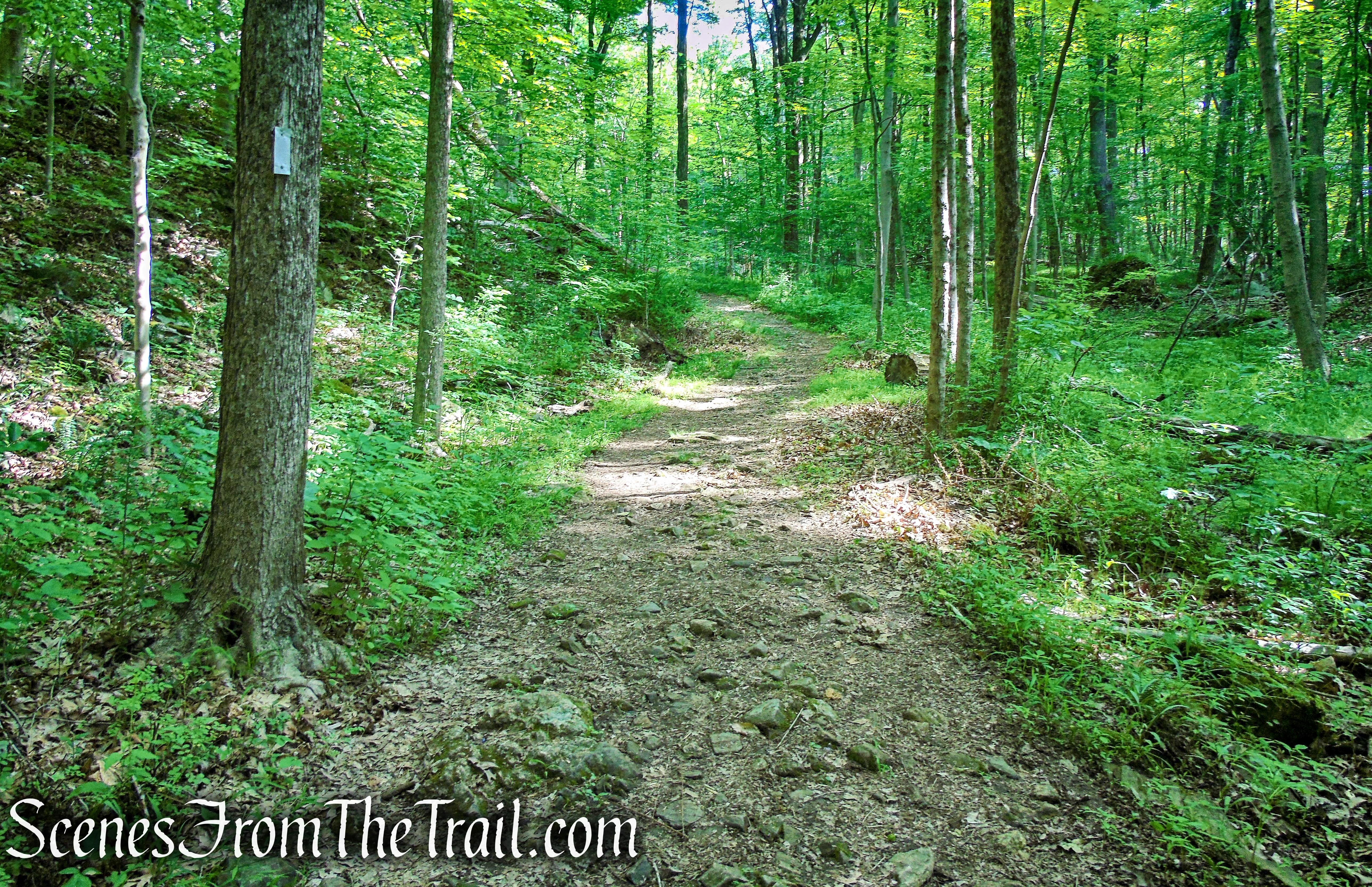 White Entrance Trail - Leon Levy Preserve