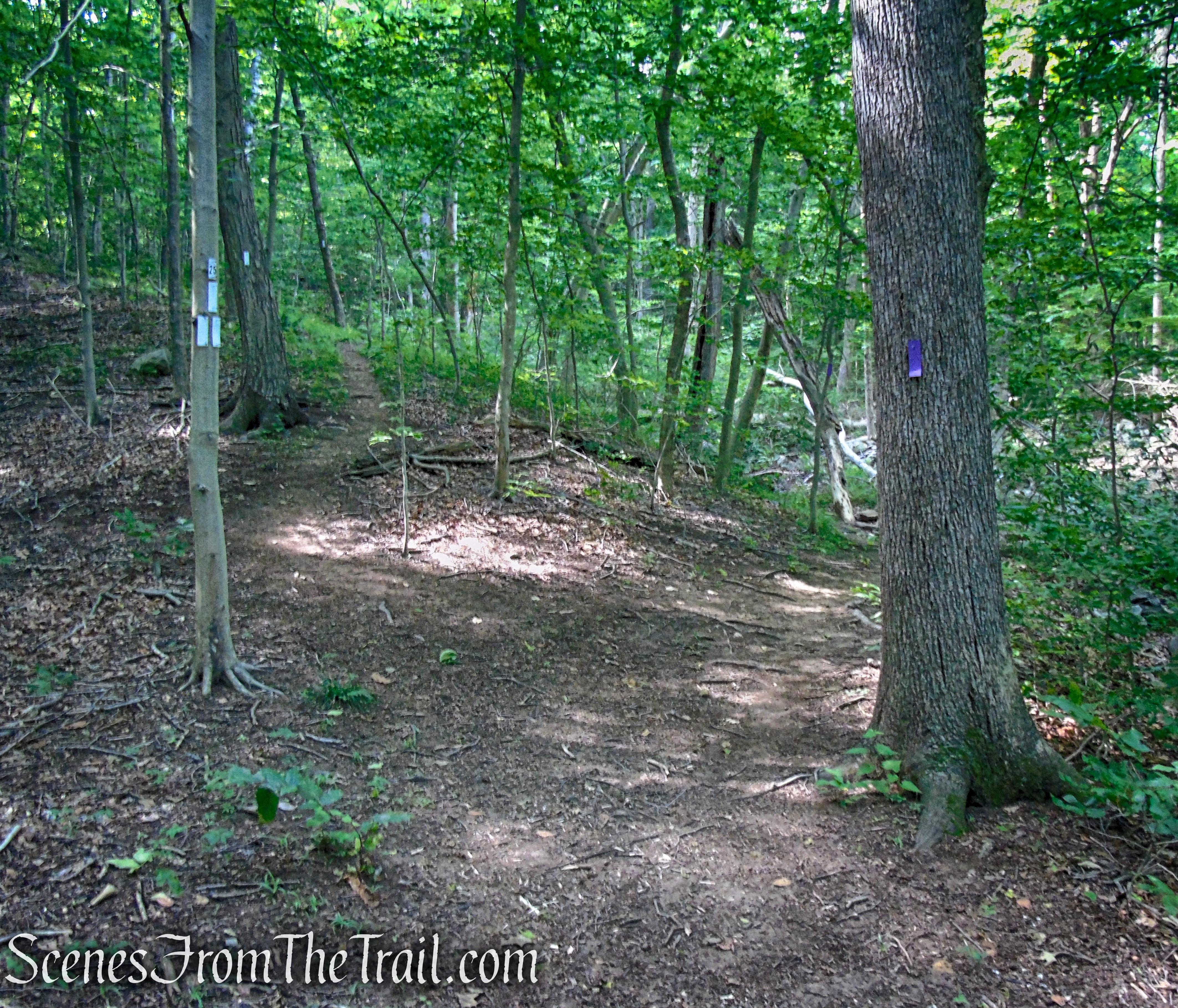 Purple Trail - Leon Levy Preserve