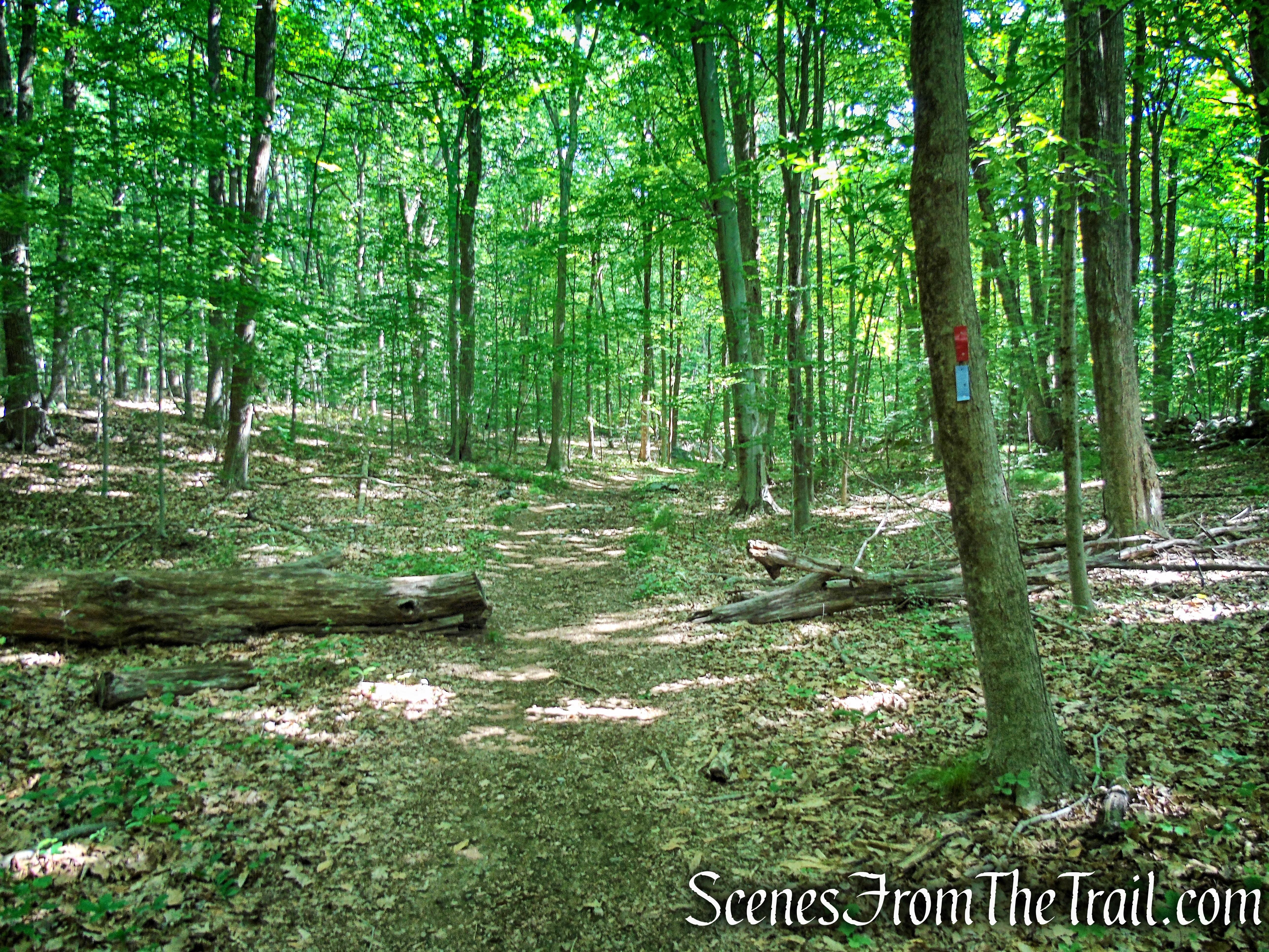 Blue Trail - Leon Levy Preserve