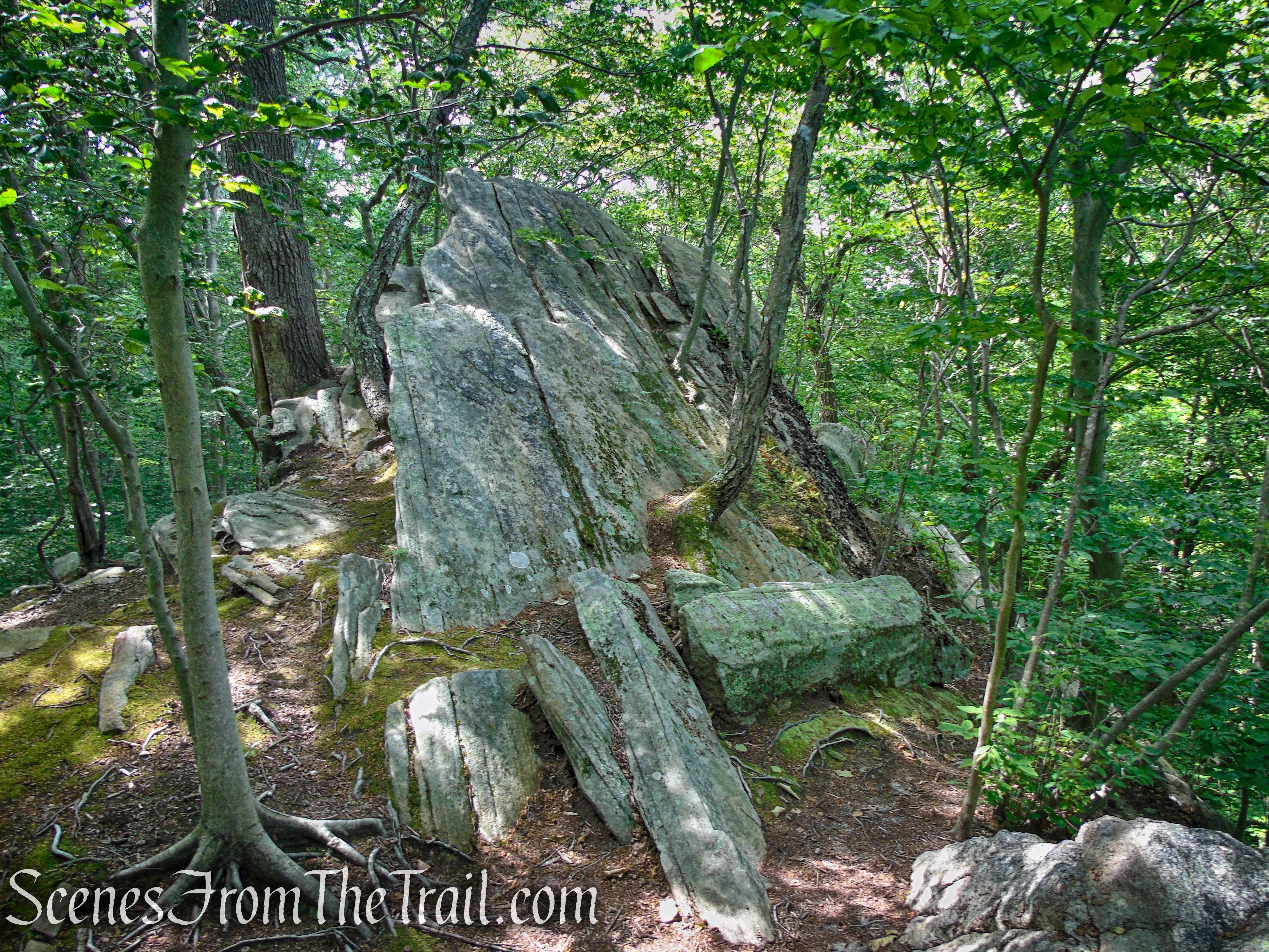 Gorge Overlook Trail Loop - Leon Levy Preserve