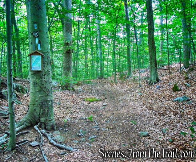 Silver Trail - Leon Levy Preserve