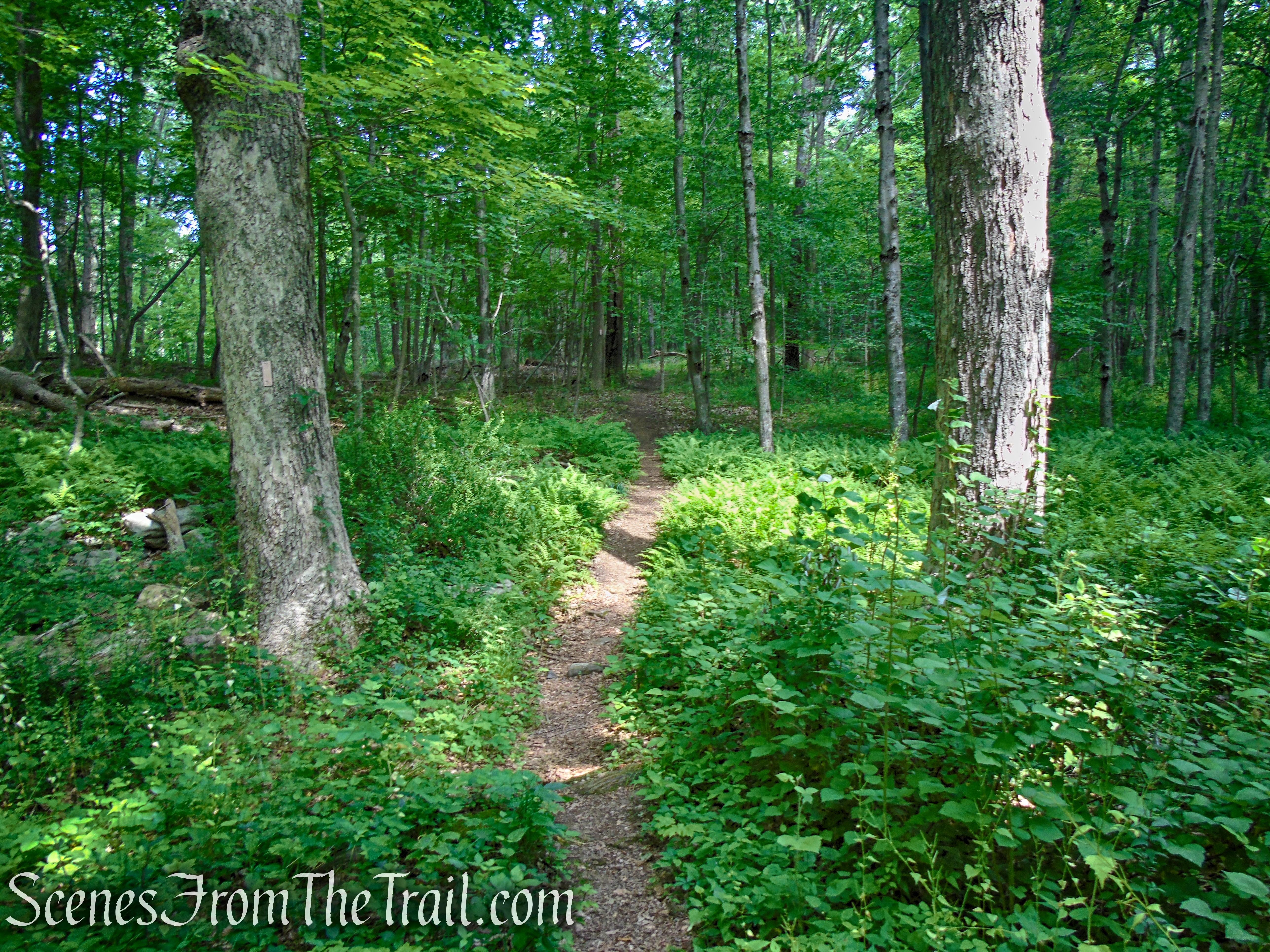 Cottage Trail - Leon Levy Preserve