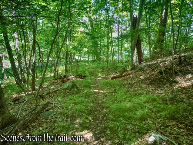 Blue Lake Trail - Salt Hill State Forest