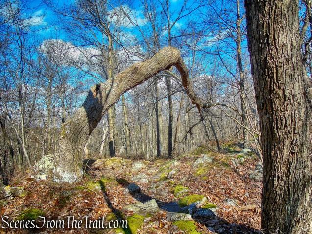 Blue Trail – Cascade Lake Park