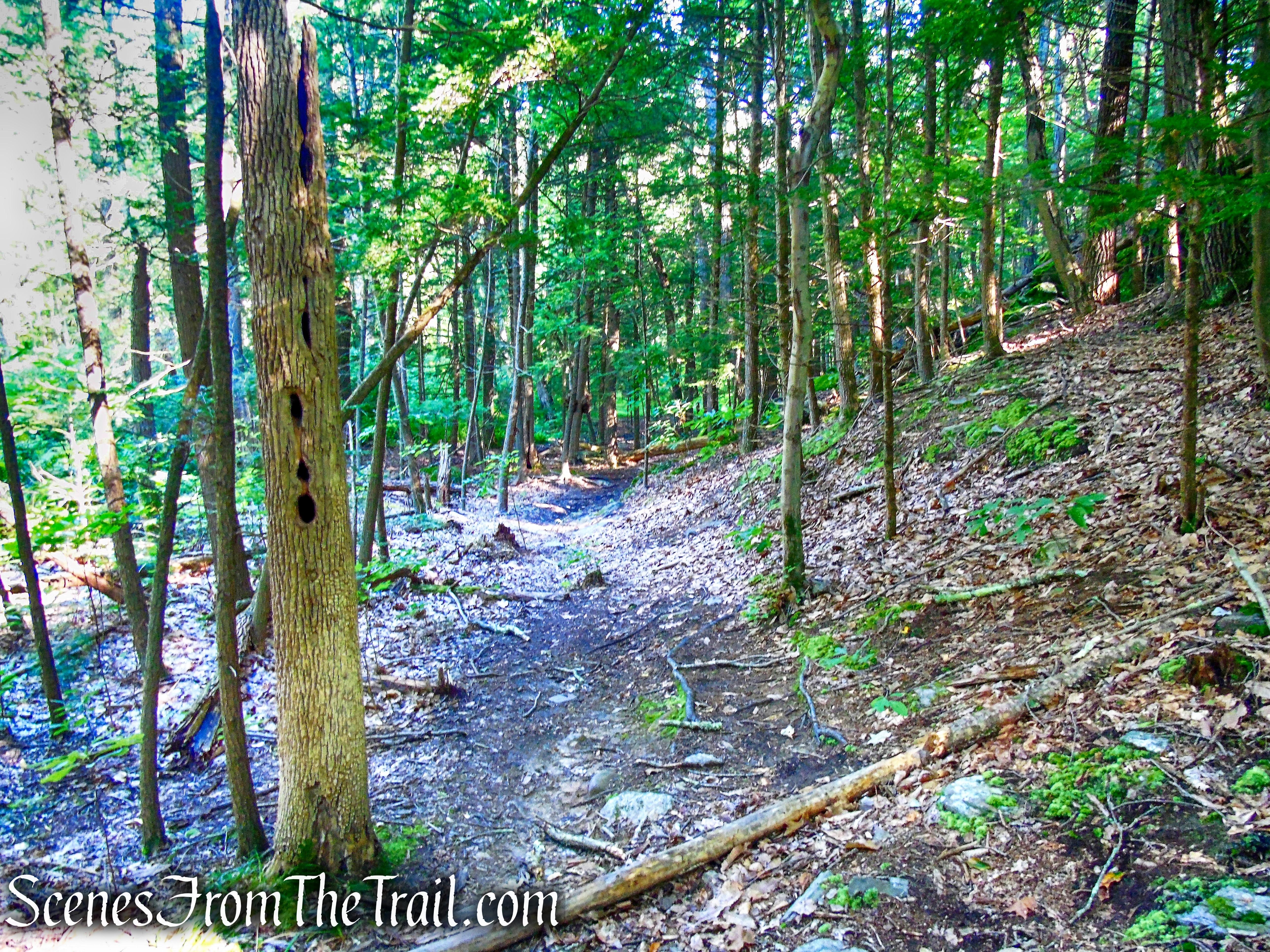 unmarked trail - Little-Laurel Lime Ridge Park