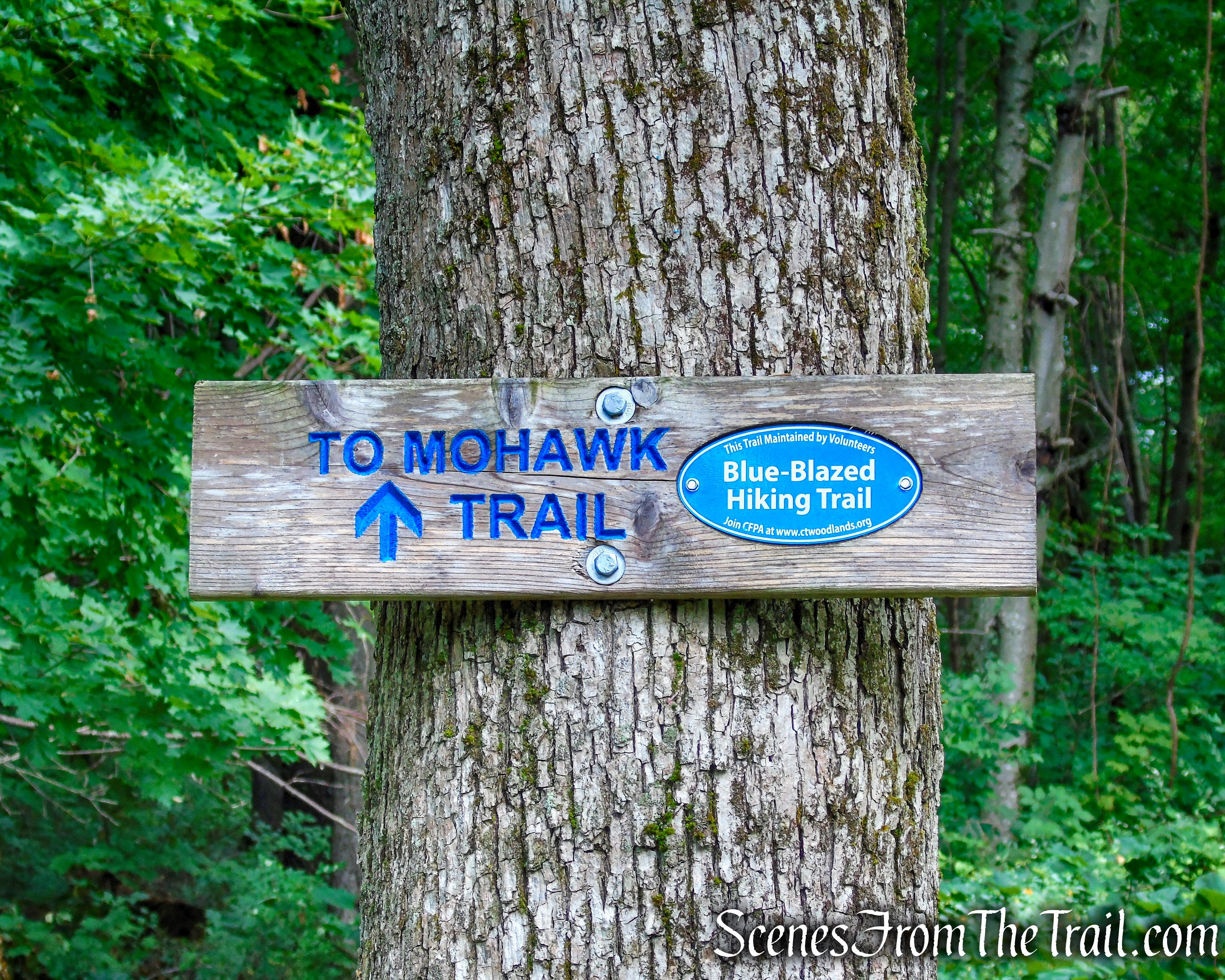 Mohawk Trail - Mohawk State Forest