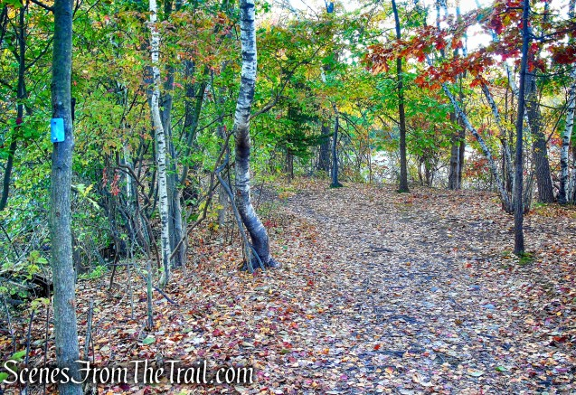 Island Bridges Trail - Franklin Lakes Nature Preserve