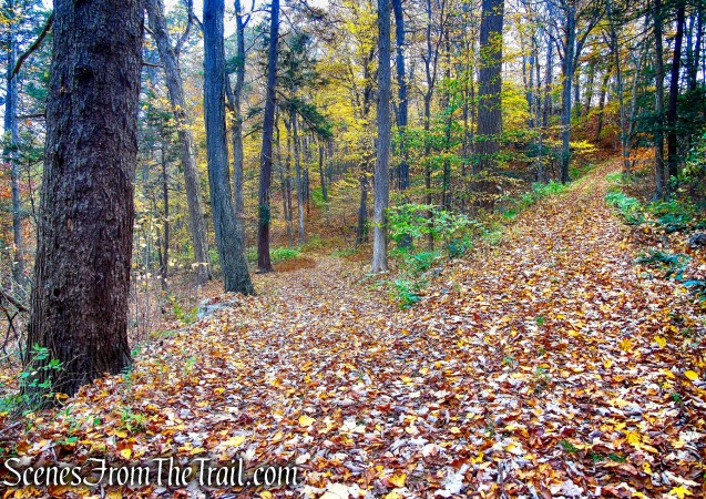 woods road - Fahnestock State Park