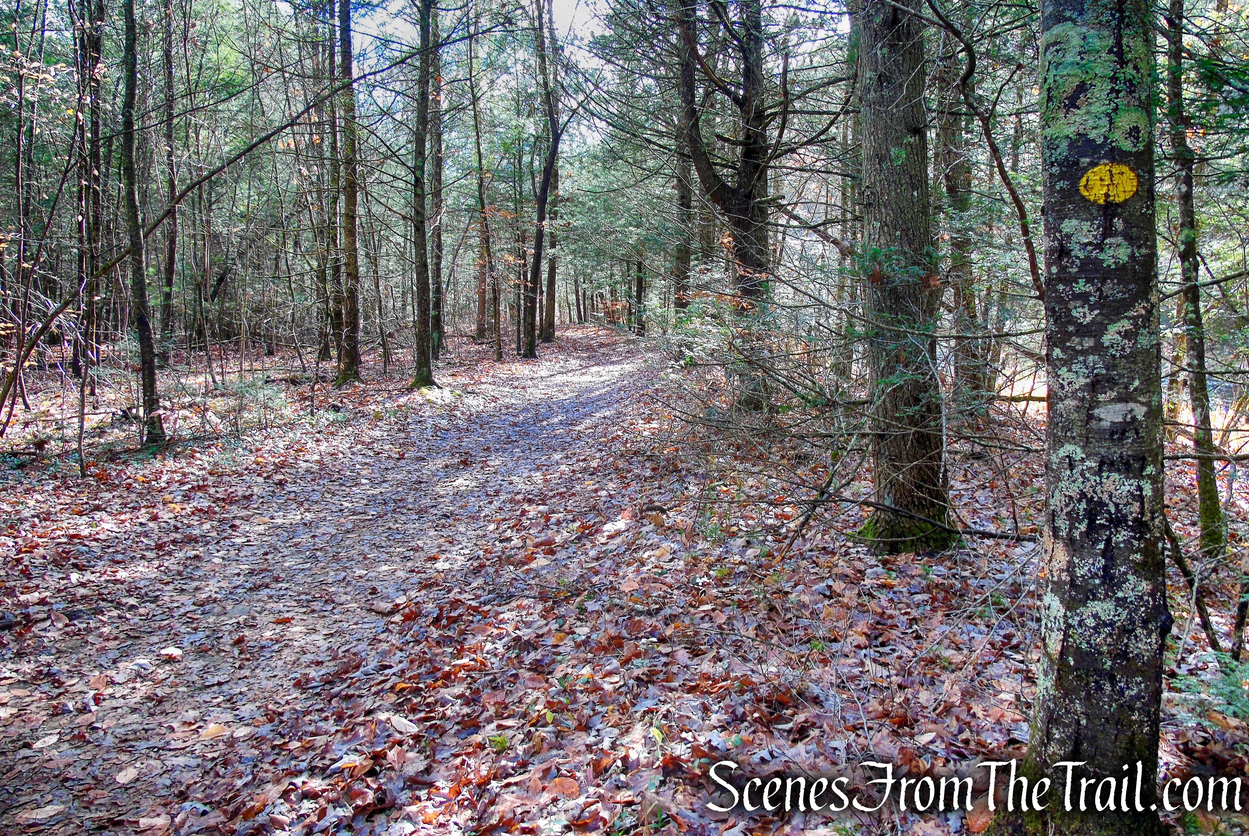 turn left on Van Sinderen Loop Trail