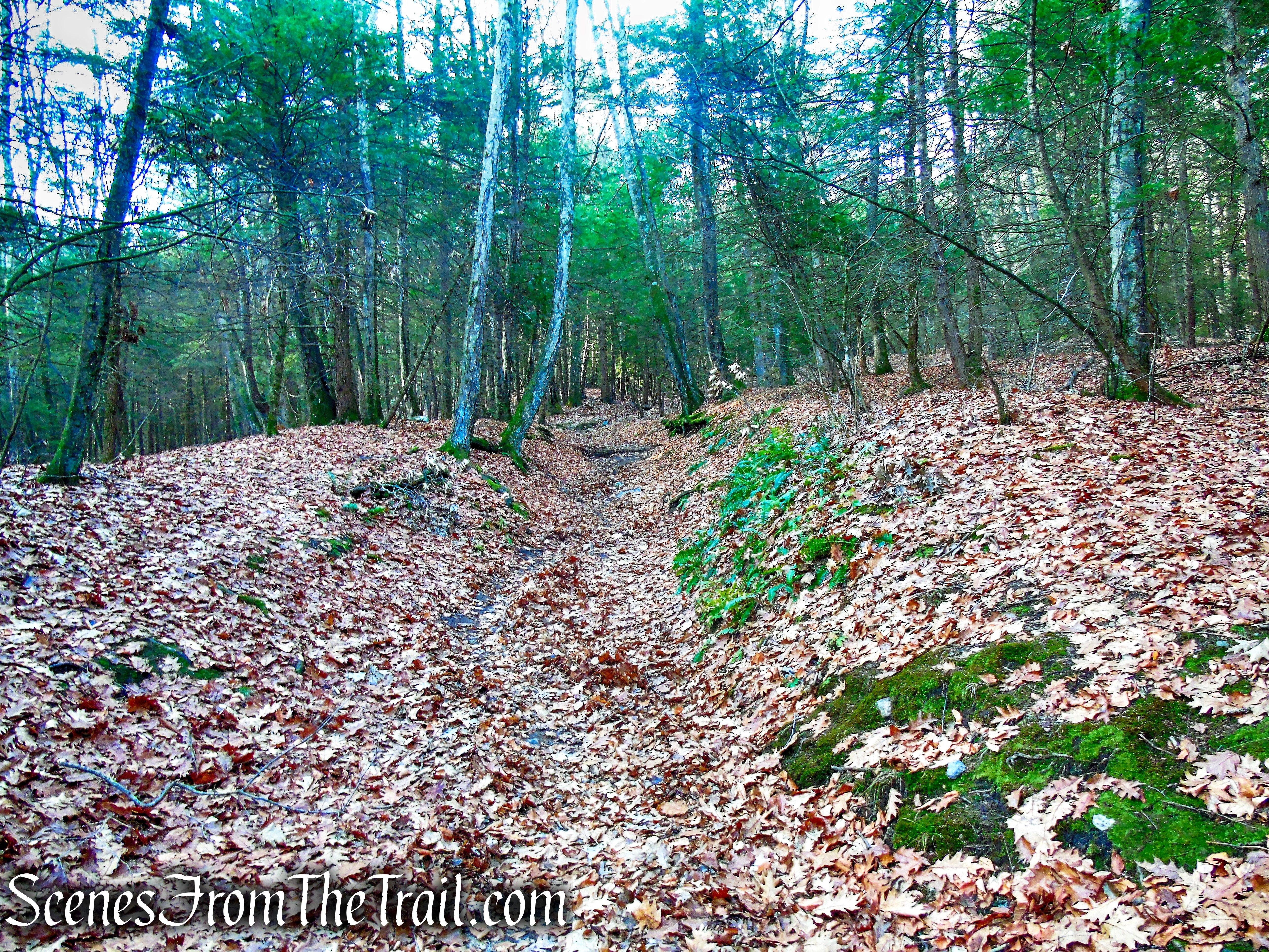 woods road – Black Rock State Park