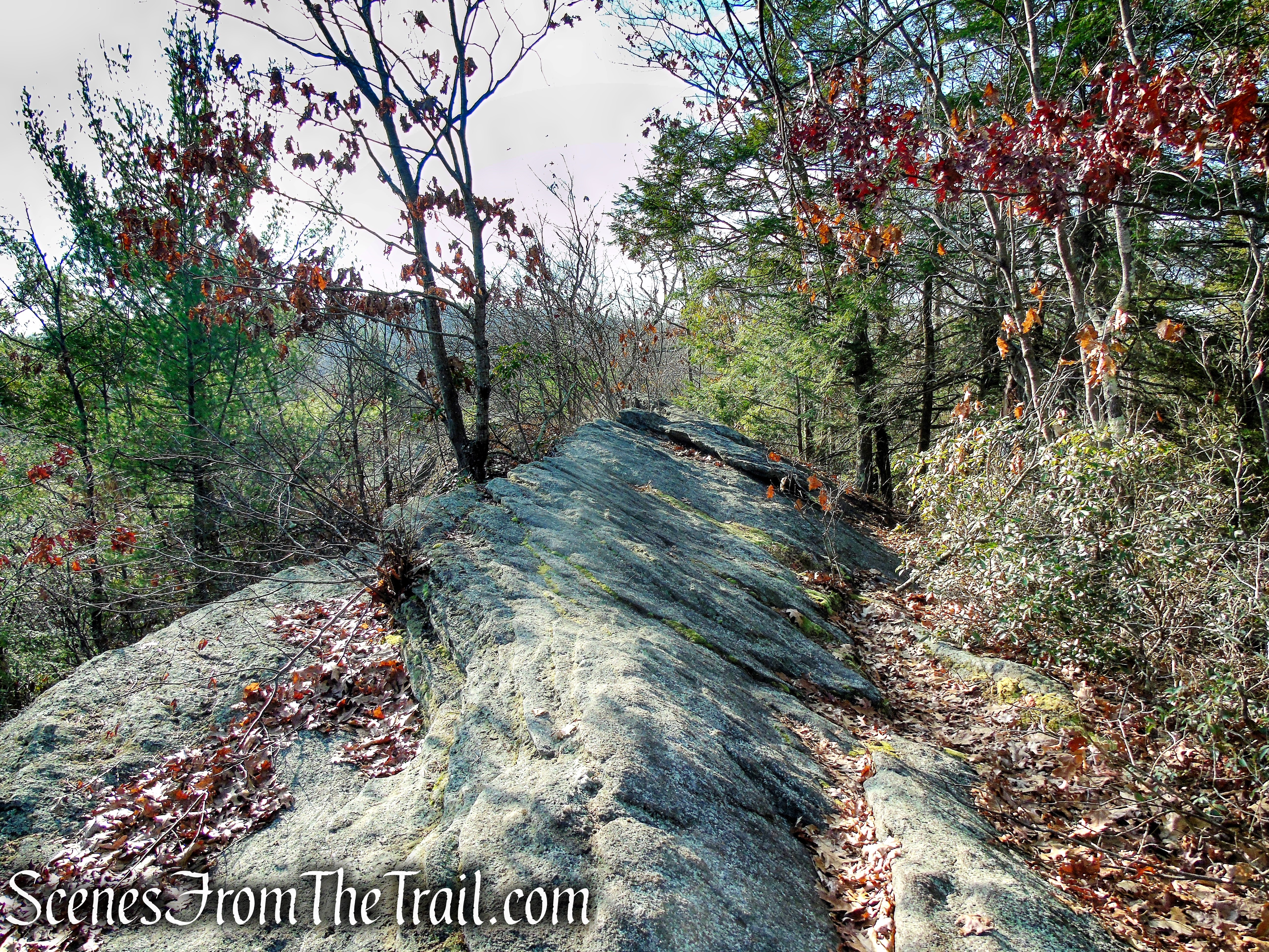 Mattatuck Trail – Mattatuck State Forest