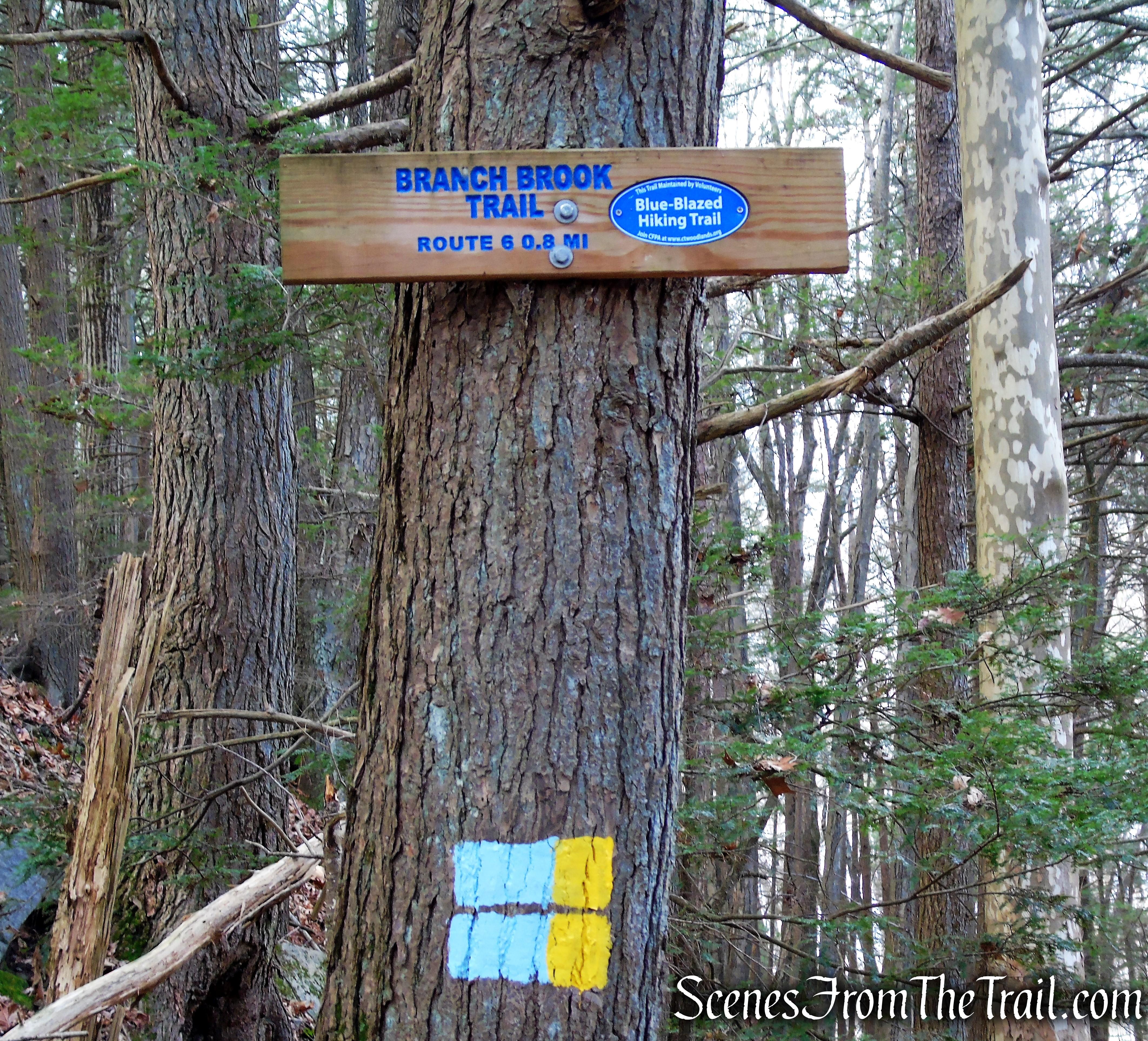 Branch Brook Trail - Mattatuck State Forest