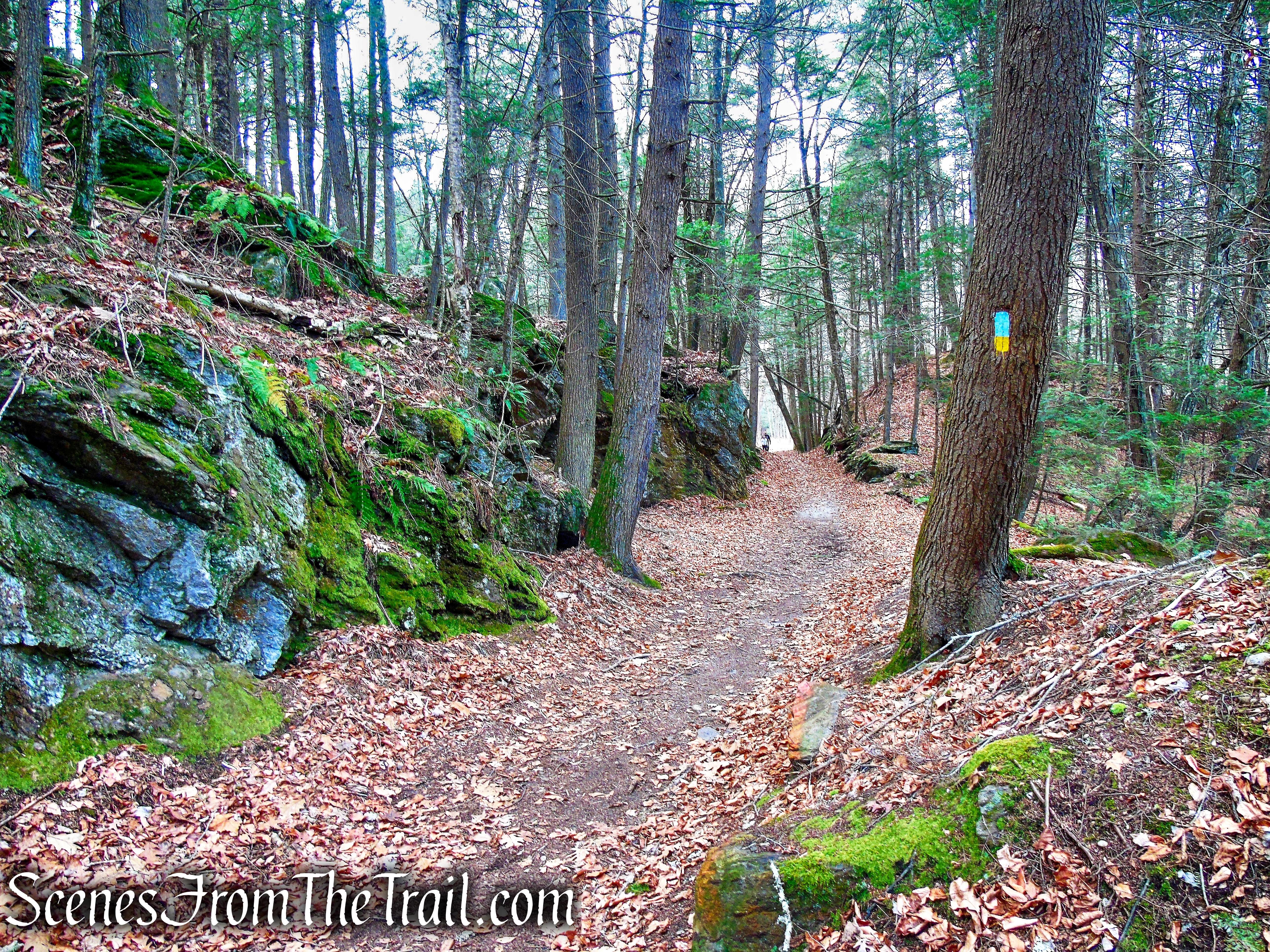 Branch Brook Trail – Mattatuck State Forest