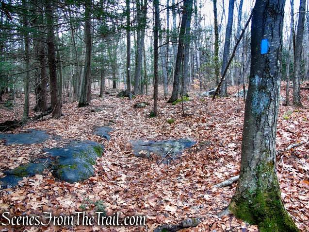 Blue Trail - Prospect Mountain Preserve
