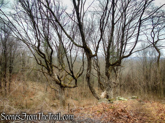 Gagarin Grove – Prospect Mountain Preserve