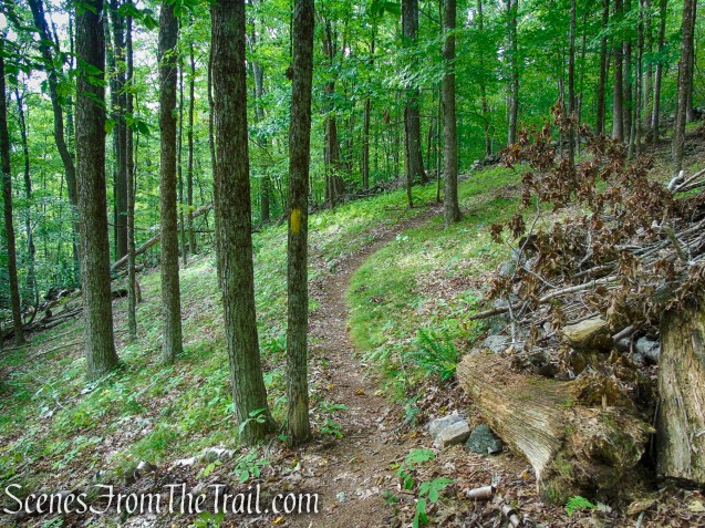 Tower Loop Trail - Haystack Mountain State Park