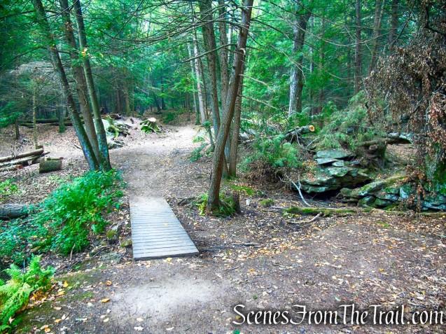 woods road - Black Rock State Park