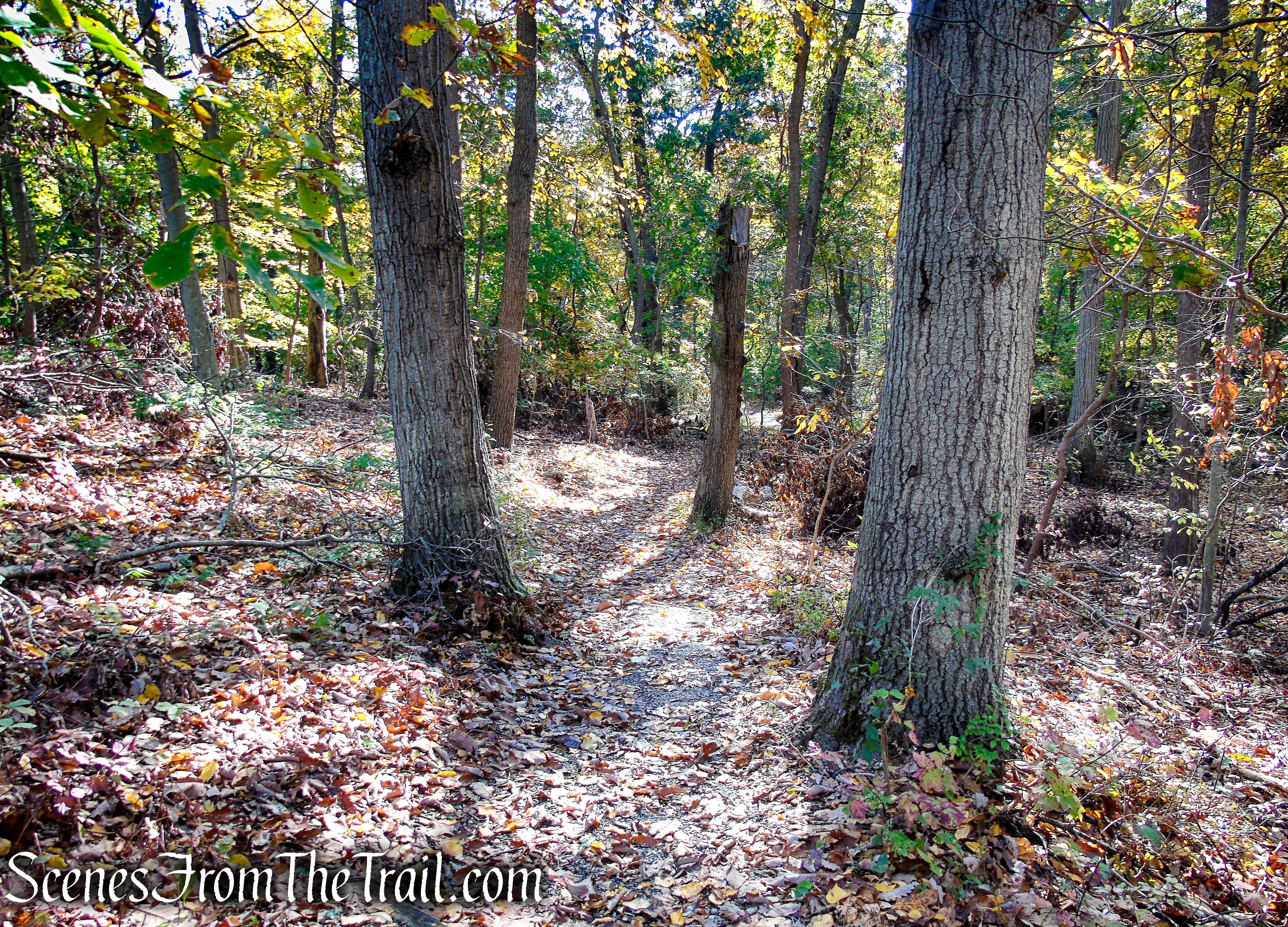 Warbler's Loop Trail
