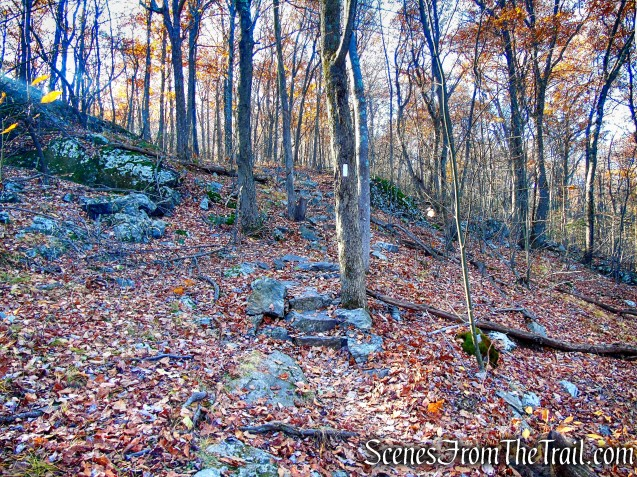 Appalachian Trail - Shenandoah Mountain