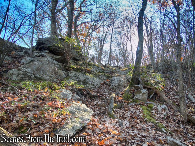 Appalachian Trail – Shenandoah Mountain