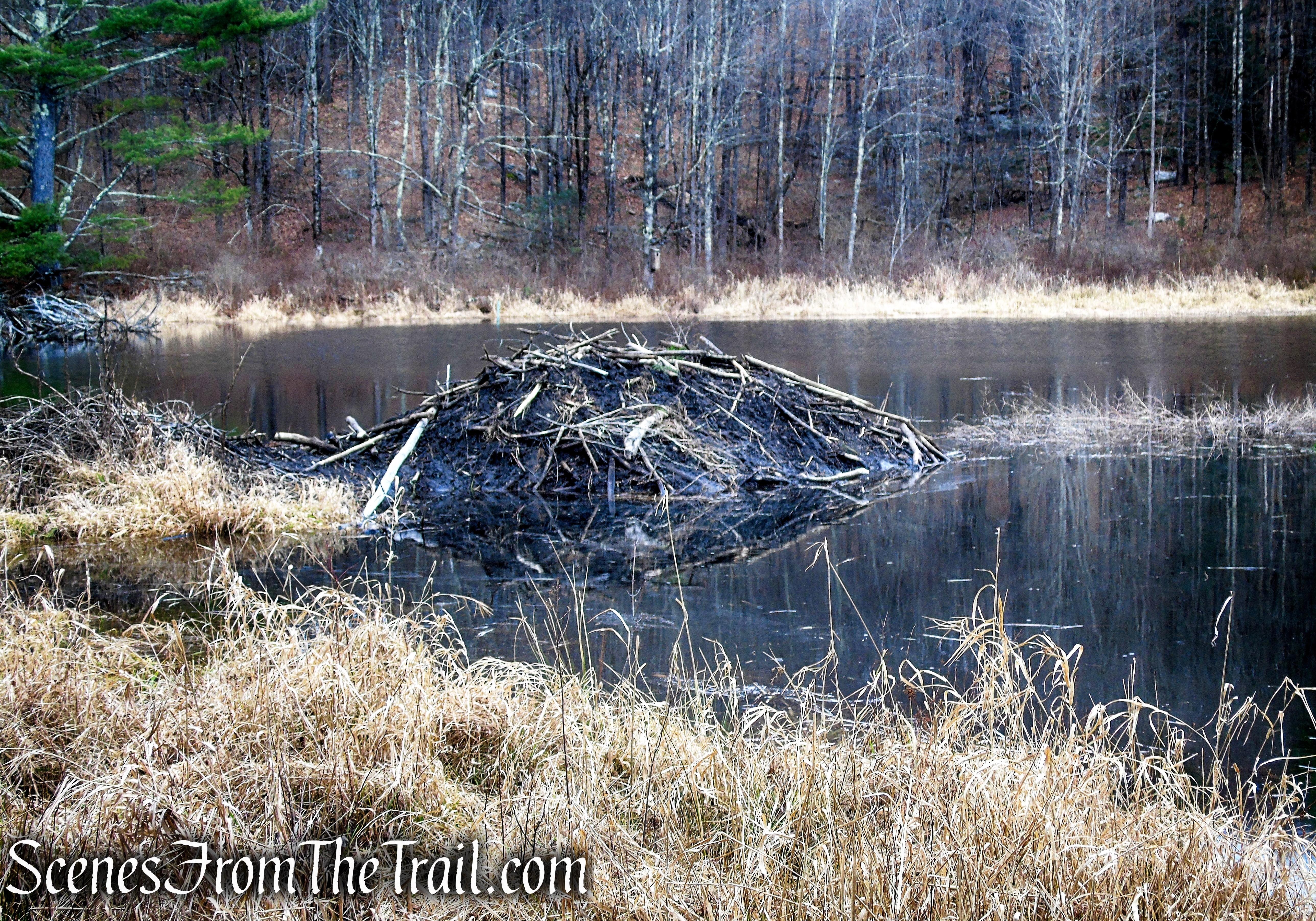 Beaver Lodge - Granniss Pond