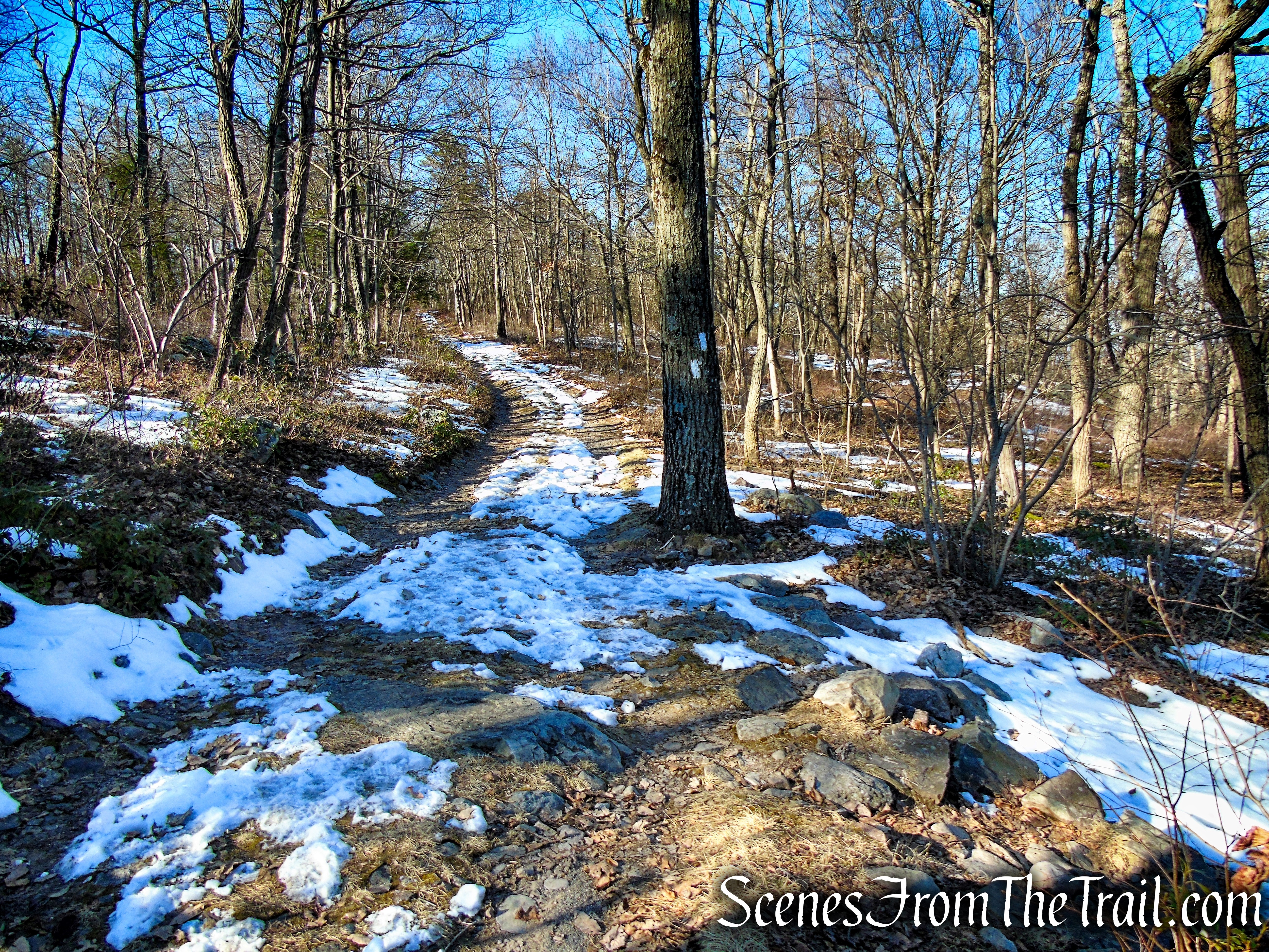 the fire road rejoins the Appalachian Trail