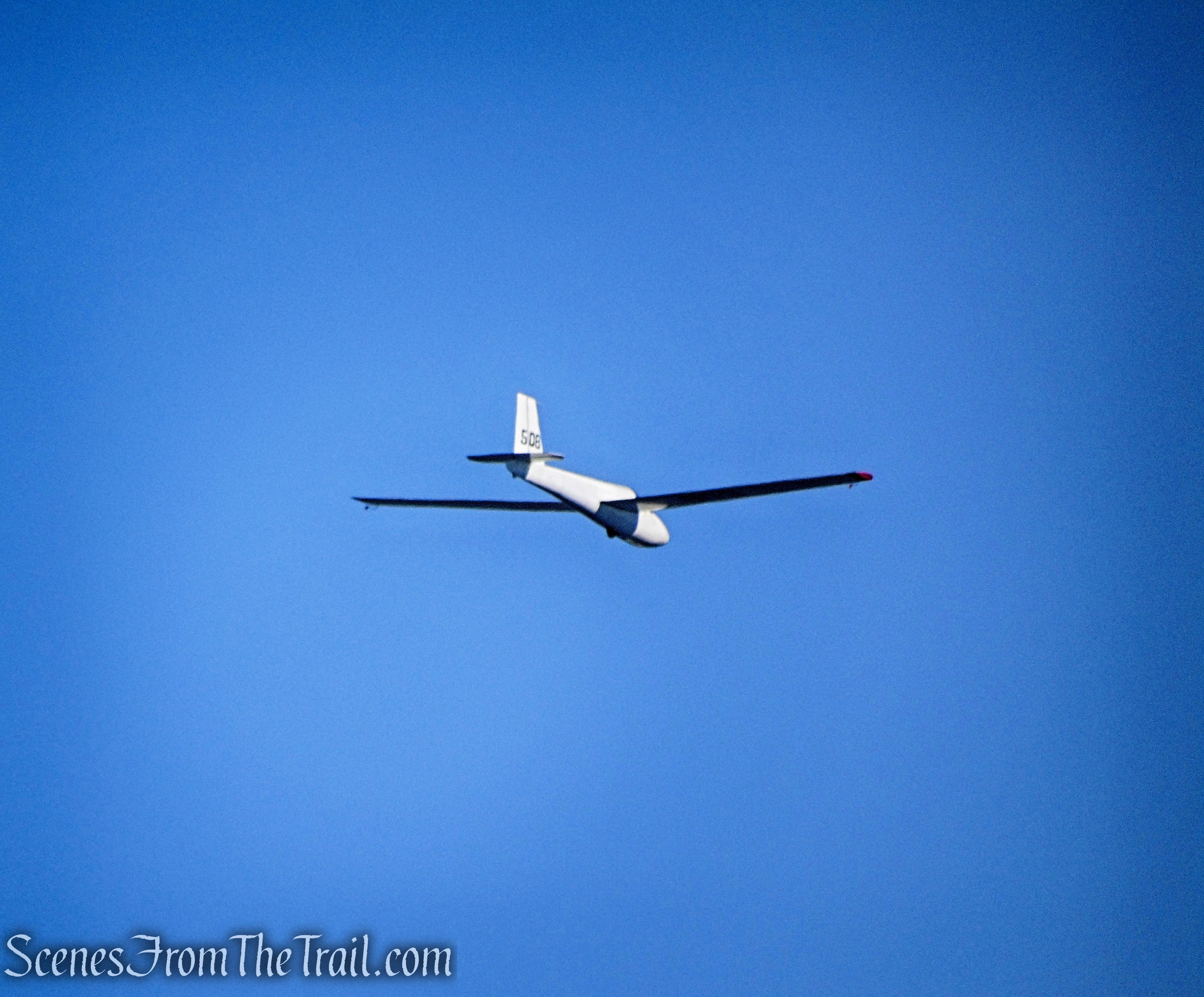 A glider floating by in the early morning