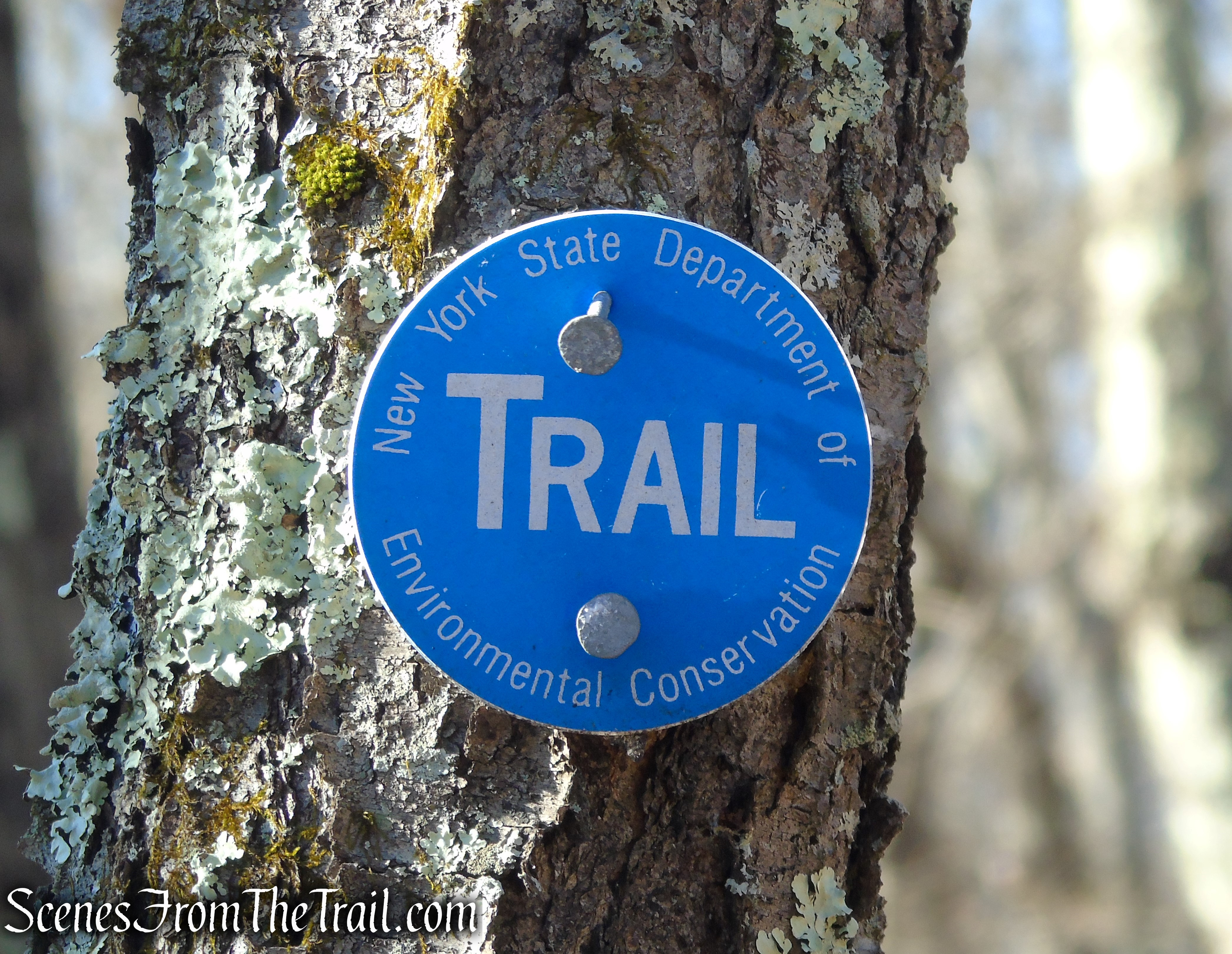 Blue DEC trail marker - Nimham Mountain Multiple Use Area