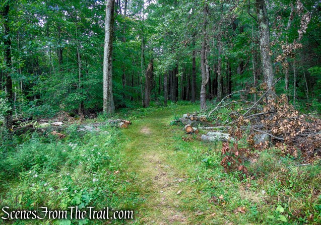 Cunningham Tower trail