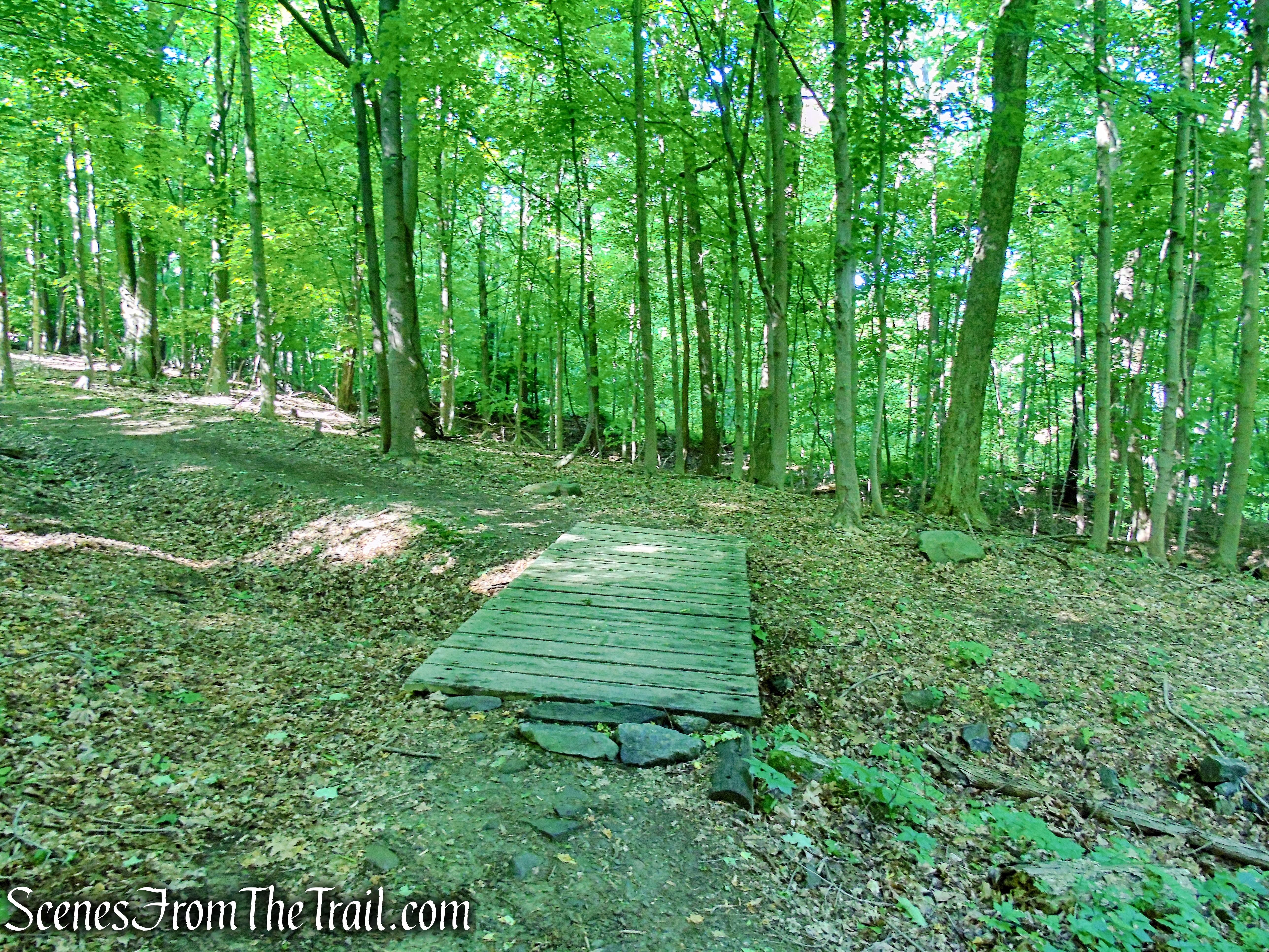 Overlook Trail - Bald Hill