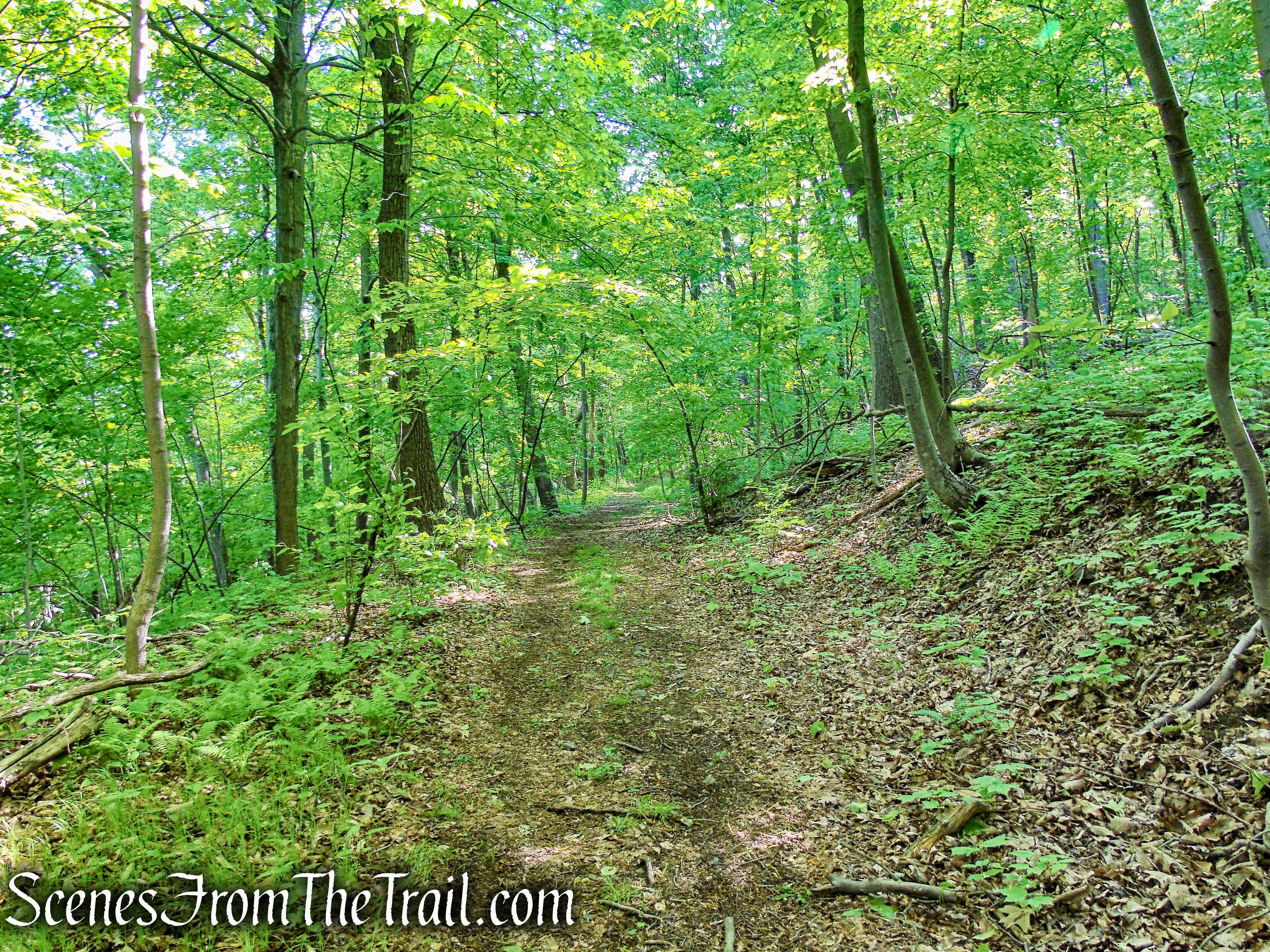 unmarked woods road - Bald Hill