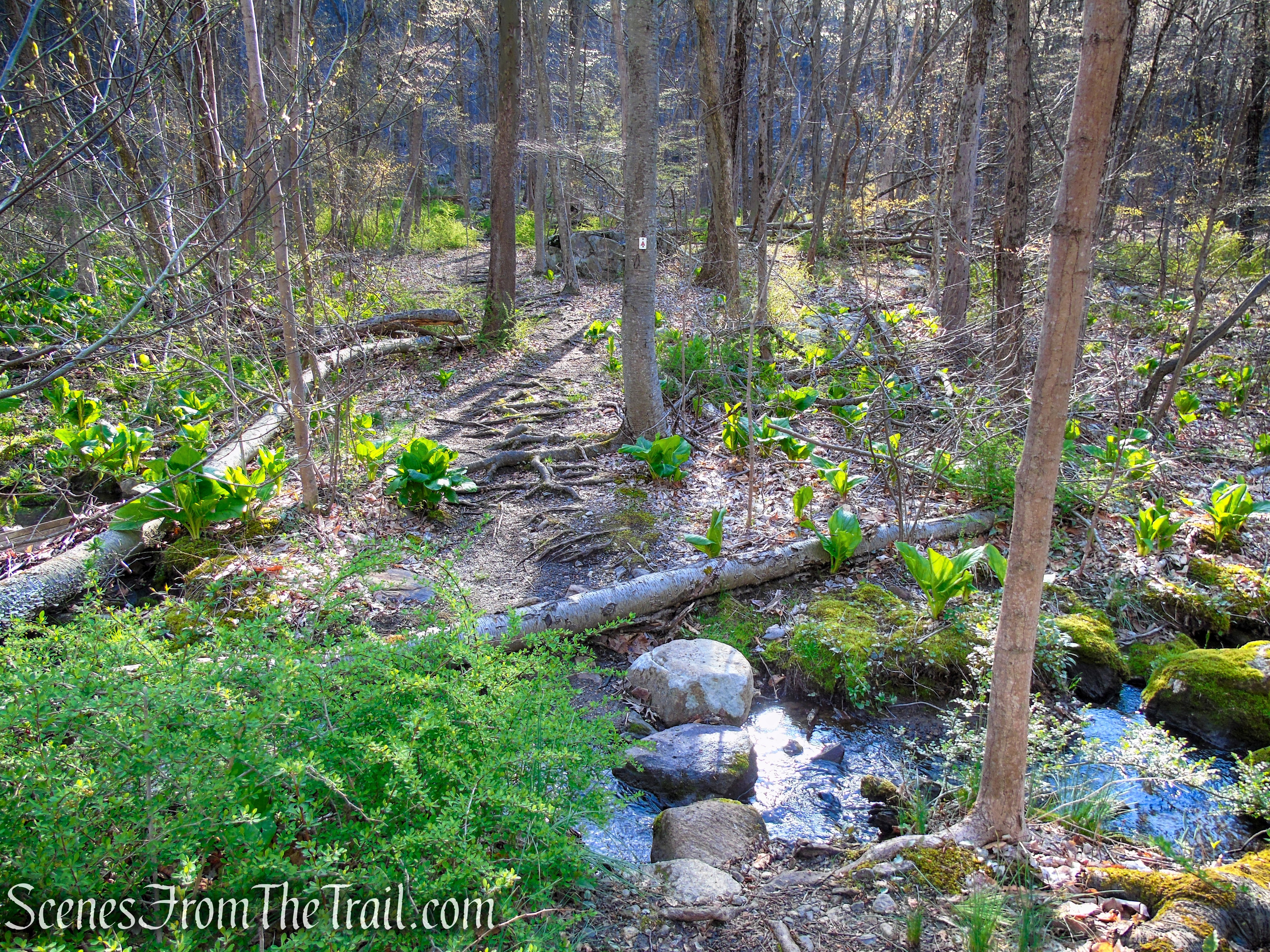 Stonetown Circular Trail - Windbeam Mountain