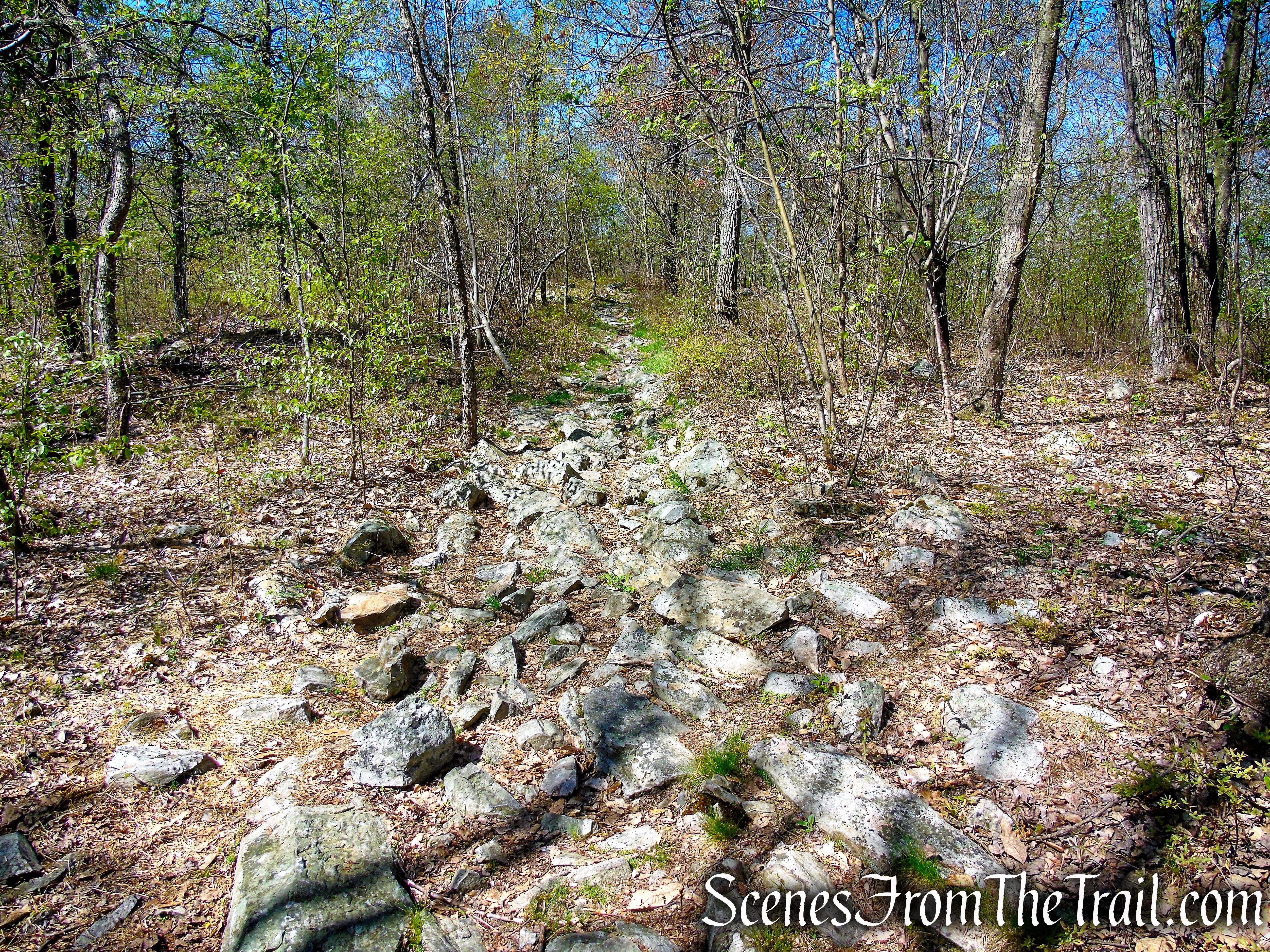 Appalachian Trail - Mount Mohican