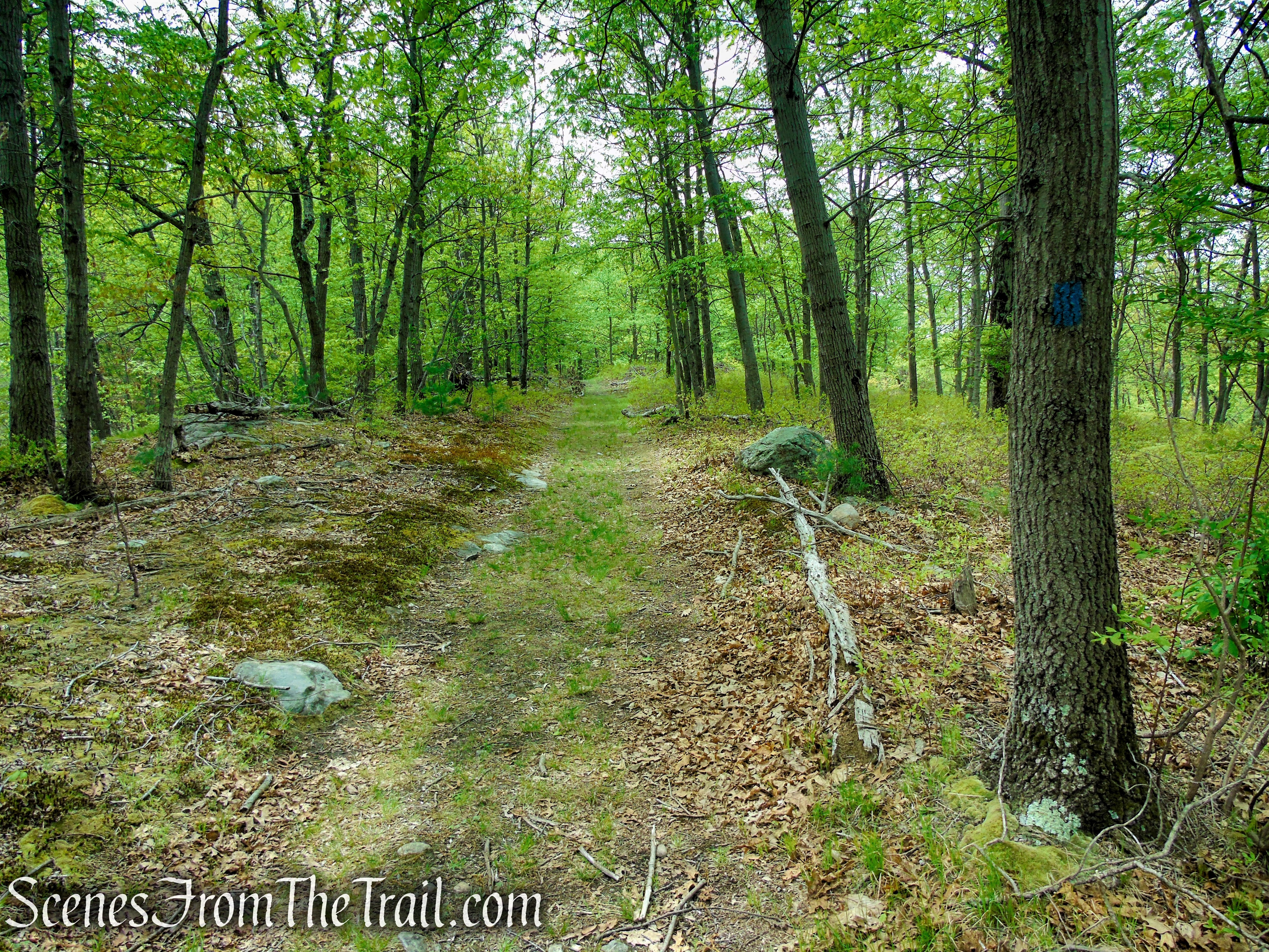 Blue Trail - Dater Mountain Nature Park