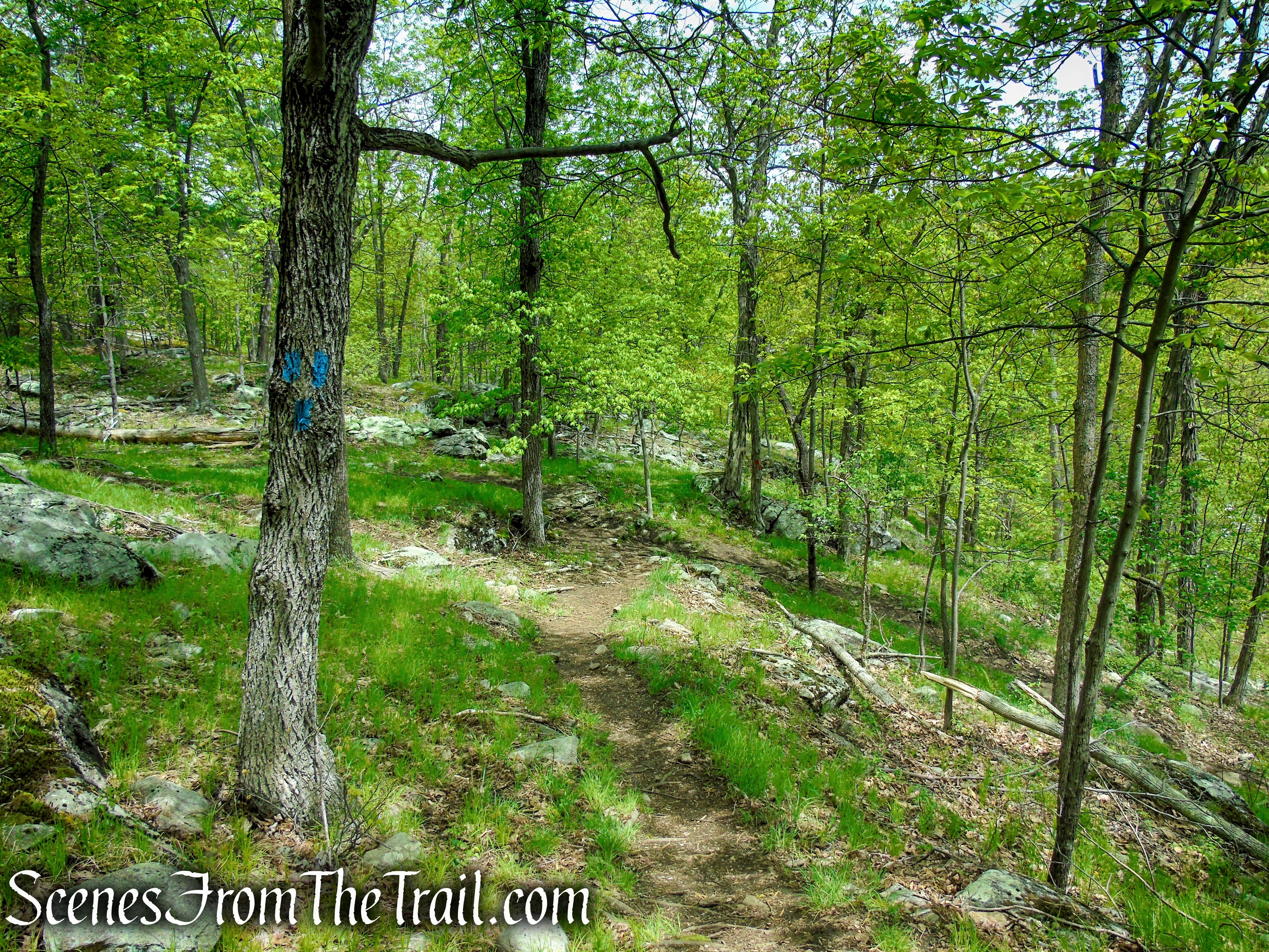 Terminus of Blue Trail - Dater Mountain Nature Park